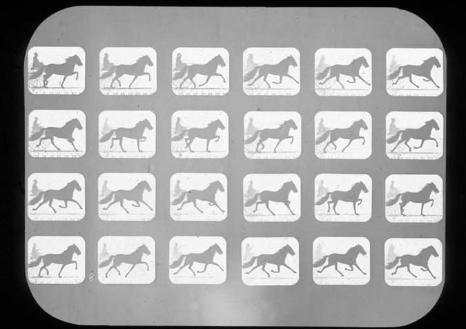 'Horse. (Occident) trot with sulky, copyright Kingston Museum and Heritage Service, 2010'